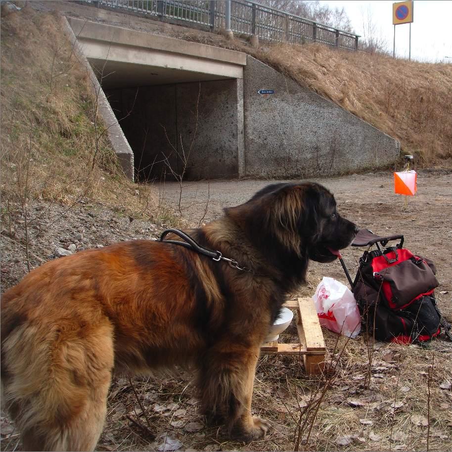Turist dog i krock med hundslade